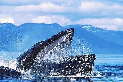 海洋动物 鲸鱼
