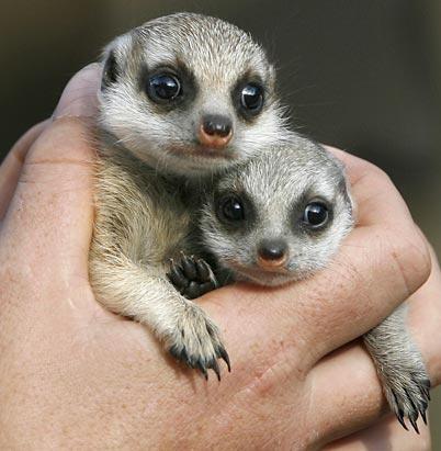 可爱的动物幼崽们