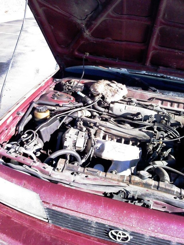 """汽车引擎盖里的""""惊喜""""[18P]"""