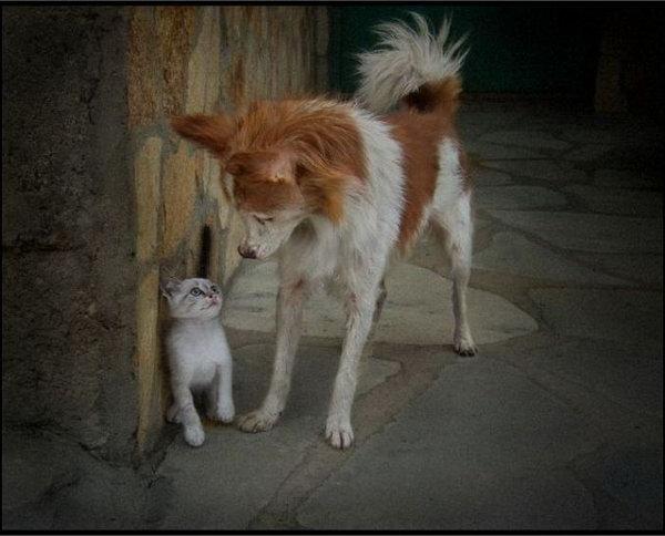 可爱动物图片50张