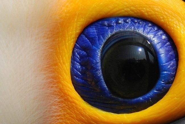 猜猜这是什么动物的眼睛