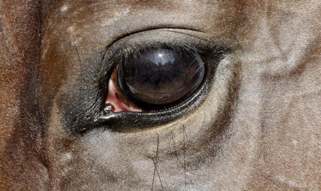 动物们的眼睛