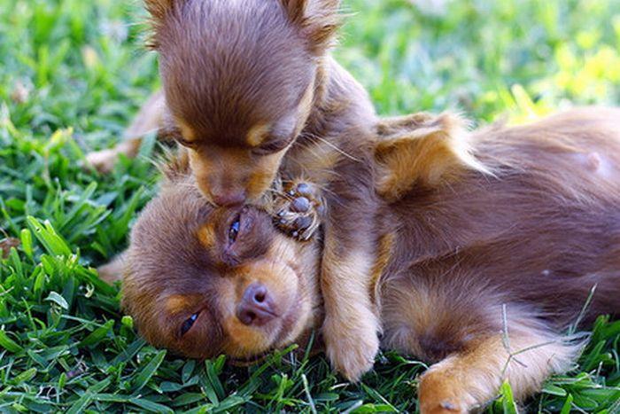 天真可爱的小动物们(118p)