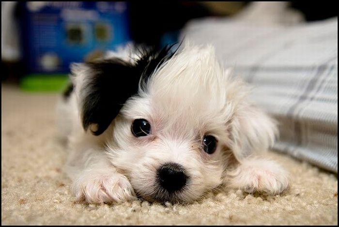 天真可爱的小动物们(118p)-图文沙龙 - 爱游戏,爱