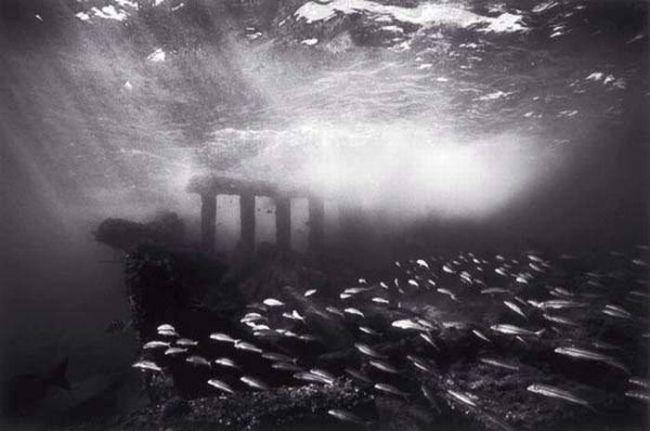 黑白照片诠释下的海底世界