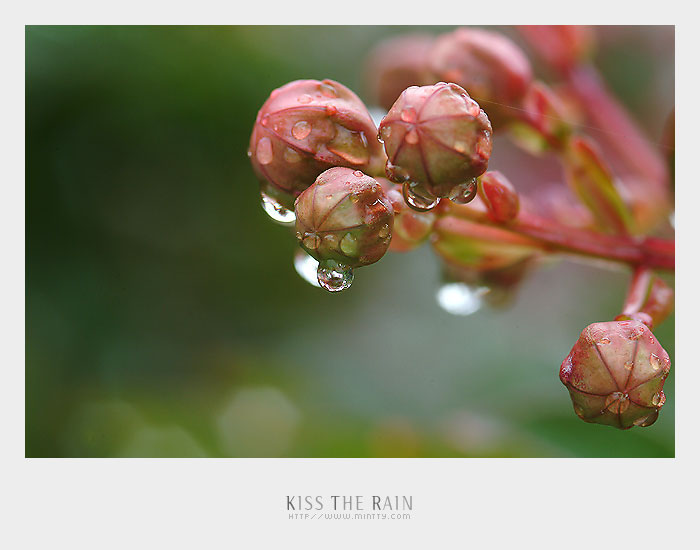 kiss the rain 雨的印记