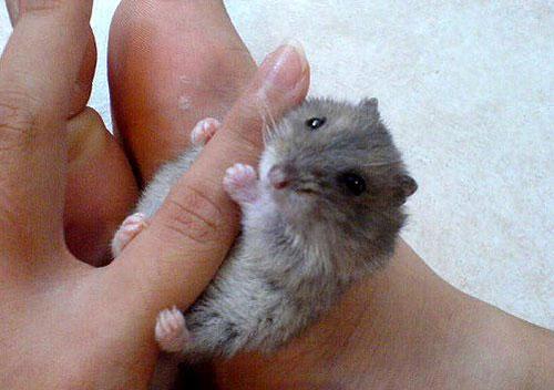 可爱超级迷你小动物