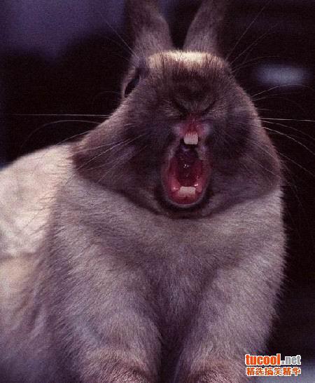 猫猫犯困时的表情