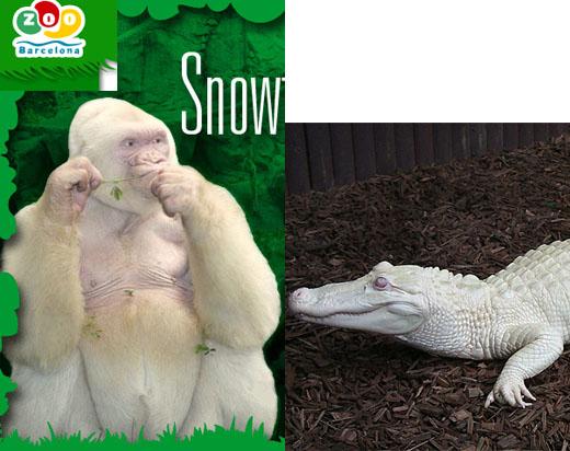 世界上长相最奇怪的动物