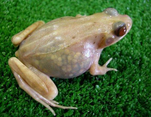 原创—寓言之十五:自吹自擂的青蛙 - 清音 - 清音
