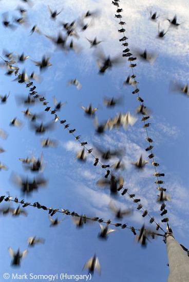 照片象征秃鼻乌鸦和城市其他乌鸦的生活状态,与小嘴乌鸦不同,它们的喙