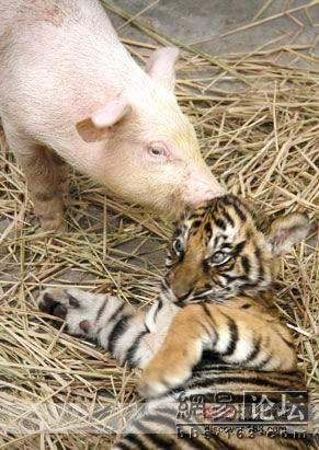 动物世界的动人之情
