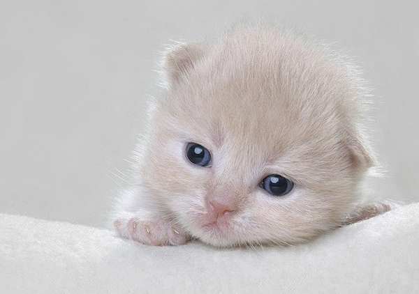 像婴儿一样可爱的猫咪