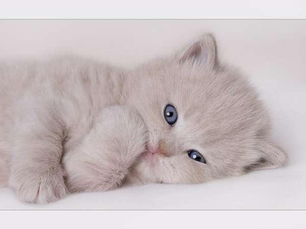 [讨论主题] 像婴儿一样可爱的猫咪