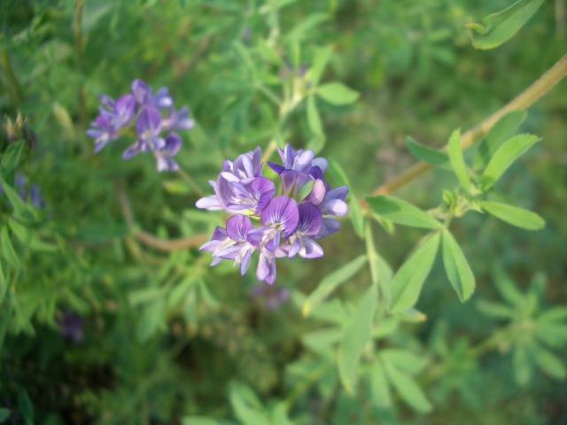 云之彼岸 天之花园 ——十一月二十二日为你种下百慕达奶油花