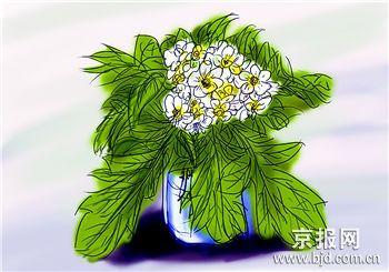 云之彼岸 天之花园 ——十二月三日为你种下山楂花