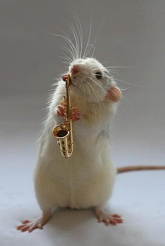 动物乐器乐队组合简笔画