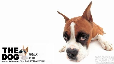 世界名狗小时候是这样滴 - AAA级私秘视频馆 - jb.cb.cb.cb 的博客