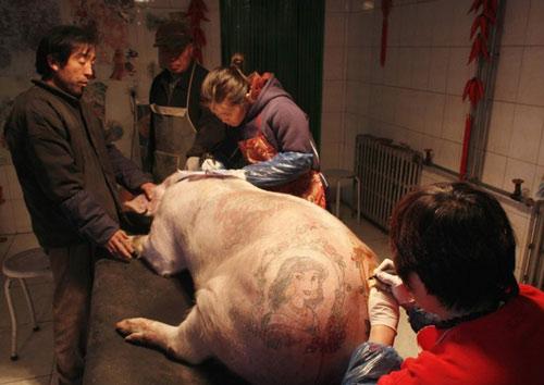 上纹有各种风格图案,据介绍,国外的收藏家和画廊喜欢收藏这种纹身猪皮