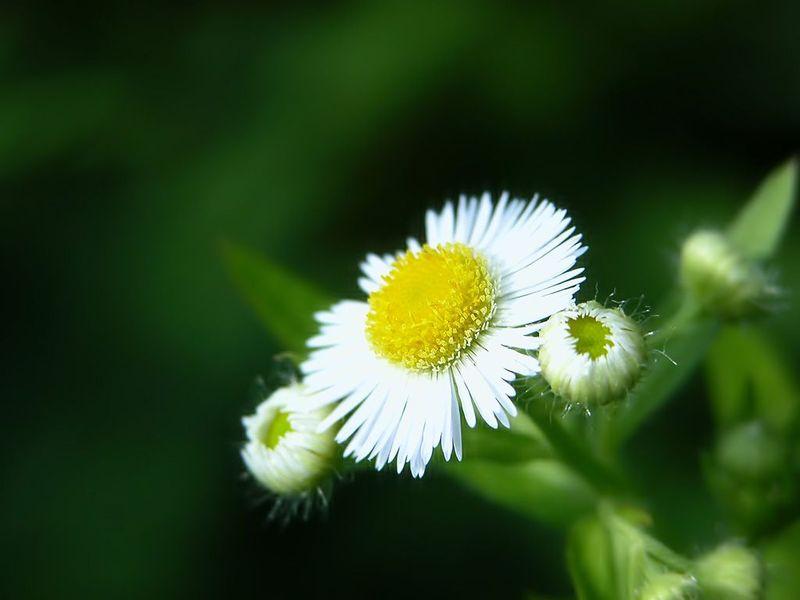 云之彼岸 天之花园 ——一月二十八日为你种下雏菊