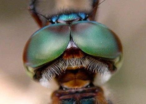 动物眼睛看到的世界什么样?