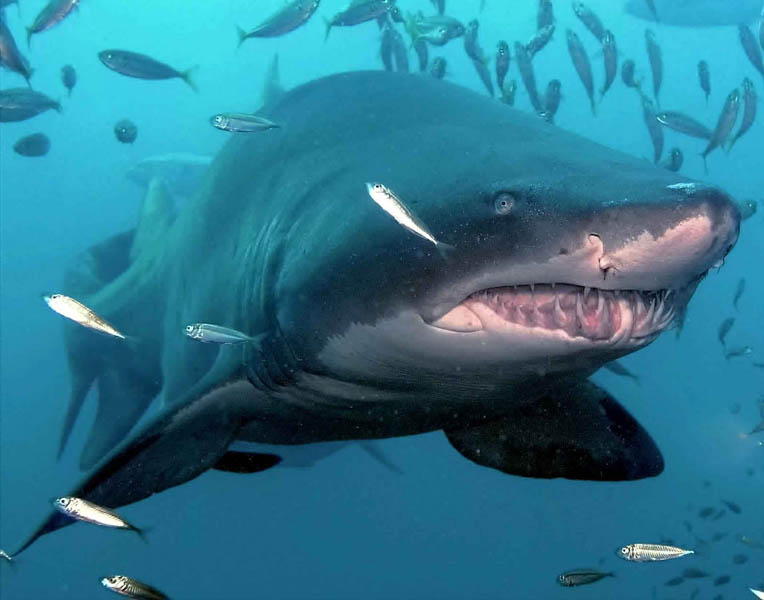 壁纸 动物 海洋动物 鲸鱼 桌面 764_600