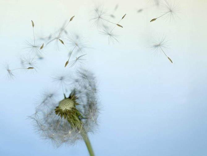 云之彼岸 天之花园 ——四月十一日为你种下蒲公英