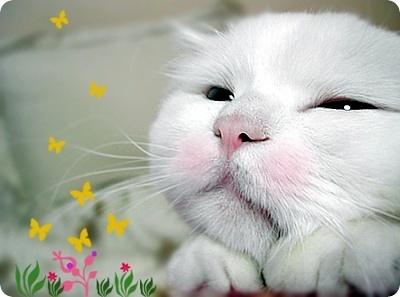 可爱动物 - AAA级私秘视频馆 - jb.cb.cb.cb 的博客