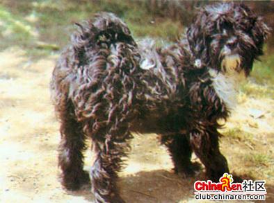 西藏吉祥动物图片