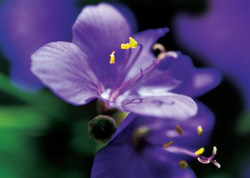 十四种难得一见的奇花 - AAA级私秘视觉馆 - 视觉与色彩的世界