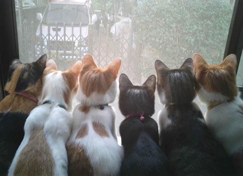动物精彩瞬间 - 暗香 - anxiang1223 的博客