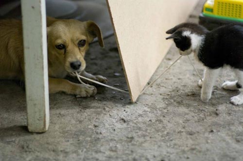 小动物的暴力和和谐 - AAA级私秘视频馆 - jb.cb.cb.cb 的博客