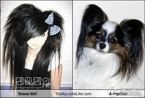 人与动物相似度大对比