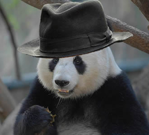 小学2年级动物熊猫画