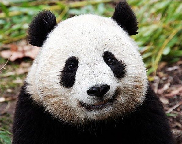 熊猫也疯狂 - AAA级私秘视频馆 - jb.cb.cb.cb 的博客