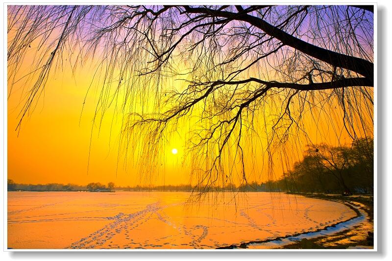 黄色的美竟是那么和谐!【精美组图】 - 暗香 - anxiang1223 的博客