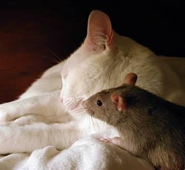 [quote]老鼠:妞,来啵一个!猫:讨厌,人家害羞么!