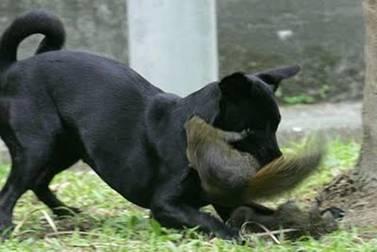 无敌了!世界上最懒最失败的捕食动物