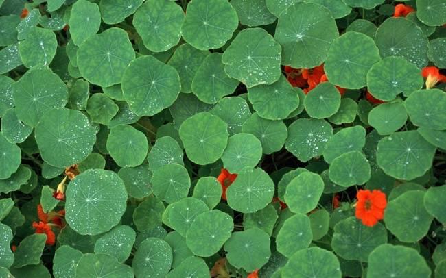 树叶~也有这么美 - AAA级私秘视觉馆 - 视觉与色彩的世界