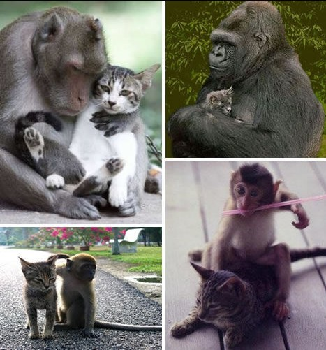 跨越种类的动物友谊