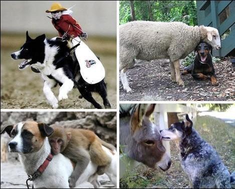还有一只在中国长春动物园的狗担当起了两只幼虎的