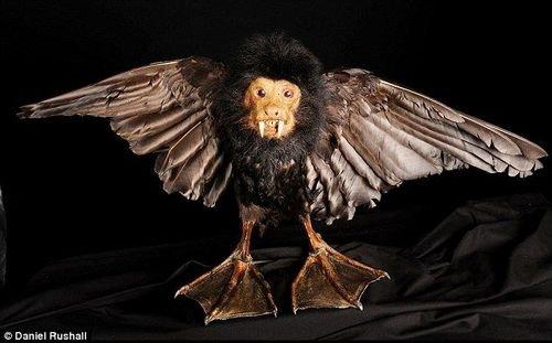 世界上最奇异的动物标本