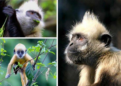 12种最濒临灭绝的动物