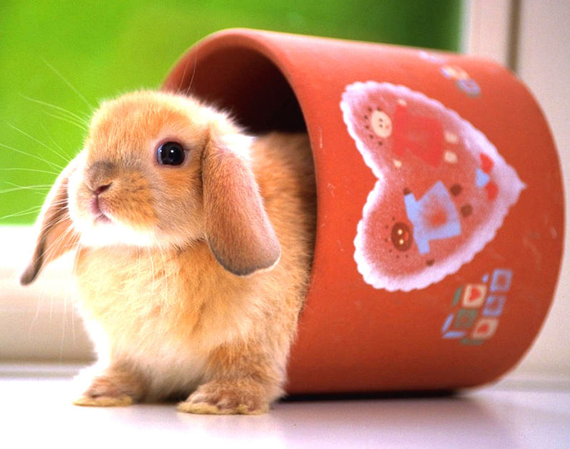 很萌~很可爱的小动物们