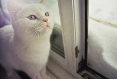 可爱猫图 多图杀猫