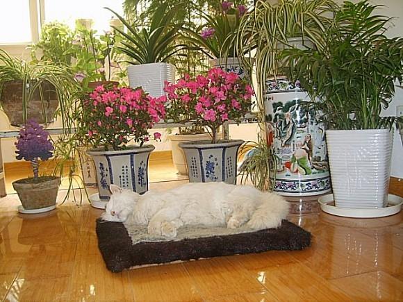 心然的红叶夕歌歌谱-夕阳西下,猫咪洒在棉垫子一点尿,依偎在美丽的花下心脏停止了跳动