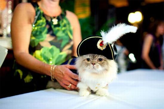 可爱时尚猫咪t台秀