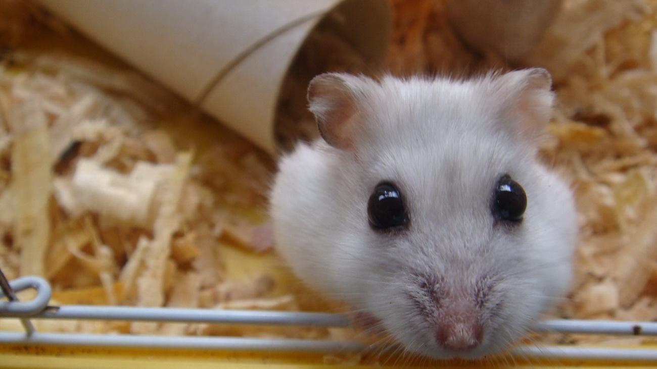 超萌可爱小老鼠简笔画