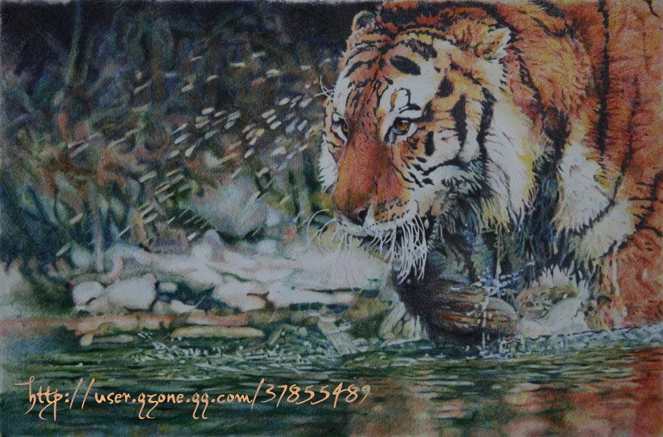 4色圆珠笔画的老虎   超精细小老虎