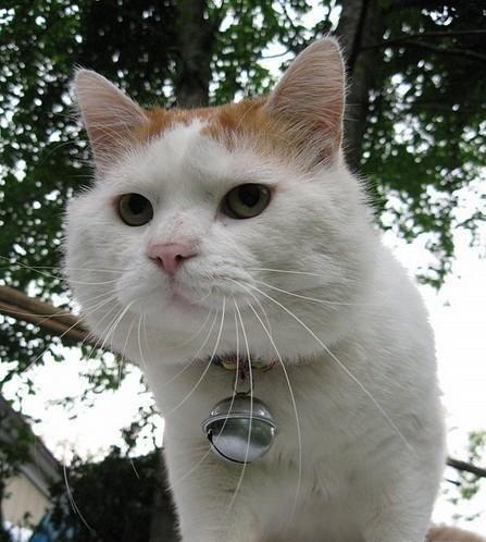 奇迹暖暖猫咪可爱头像